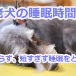 老犬の睡眠時間