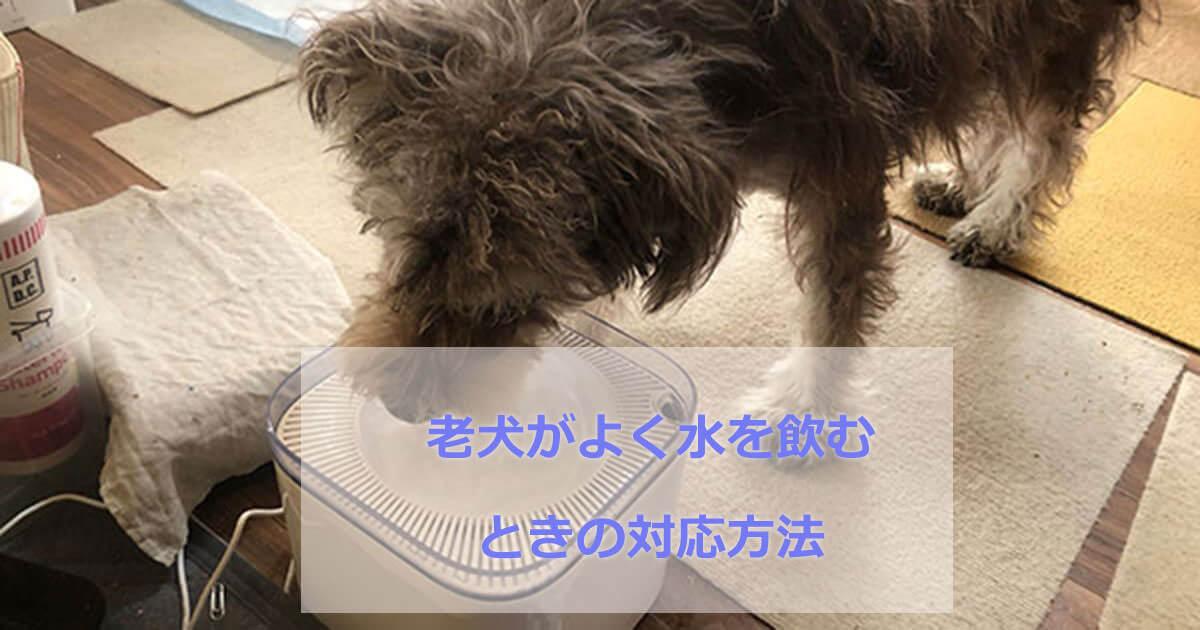 老犬が水をよく飲む