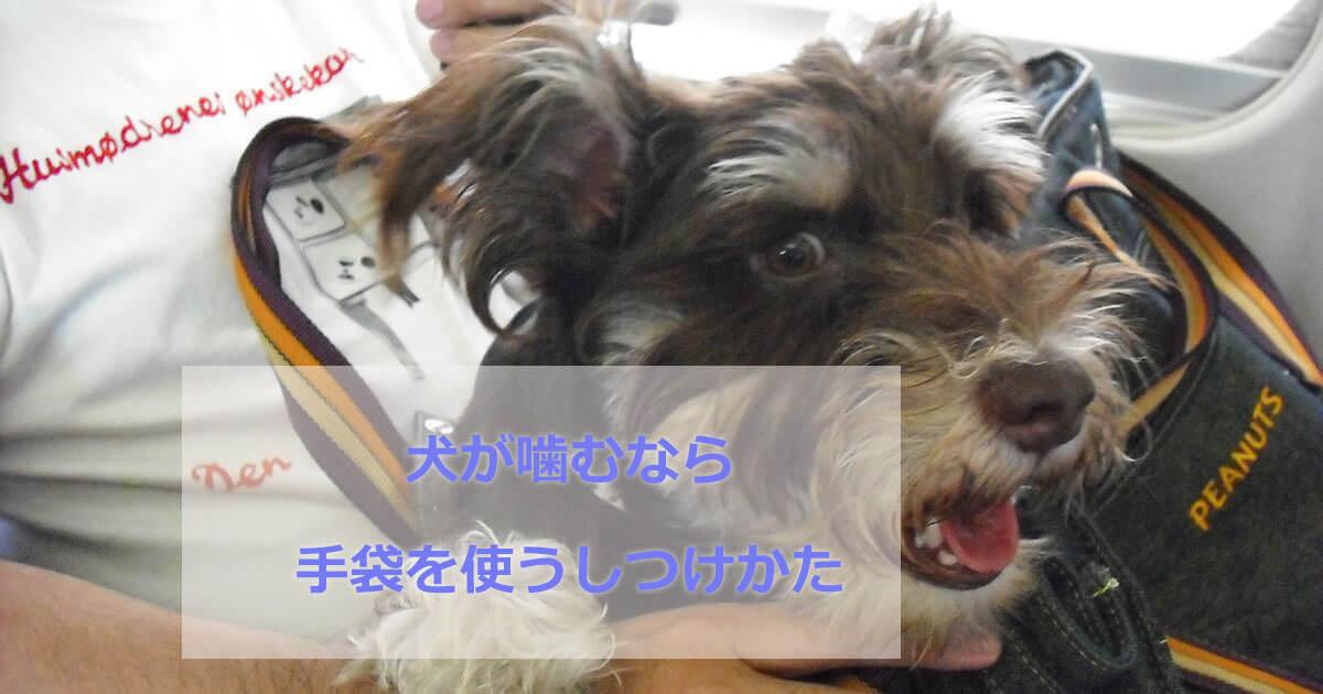 犬が噛む手袋を使う