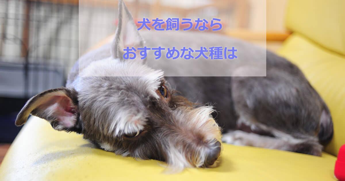 おすすめな犬種