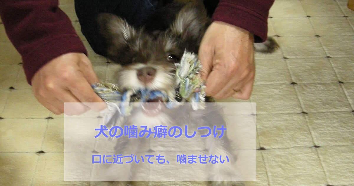 犬の噛み癖のしつけ
