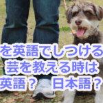 犬のしつけは英語で