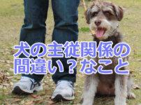 犬の主従関係で間違い