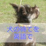 犬に待てを英語で